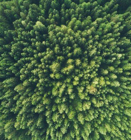 Conoce las principales oportunidades de inversión ecológica